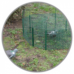 Cage à pigeons