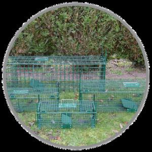 Pièges et cages